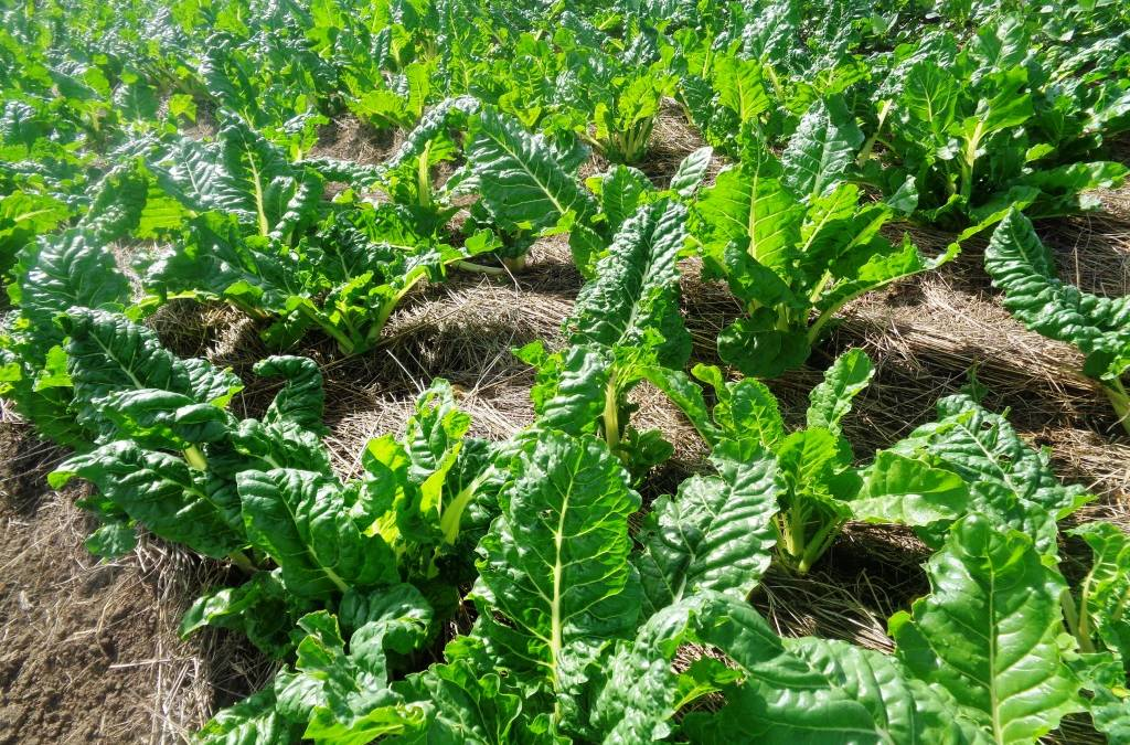 Foundations for Farming Yields Big Crops in Ngaamba