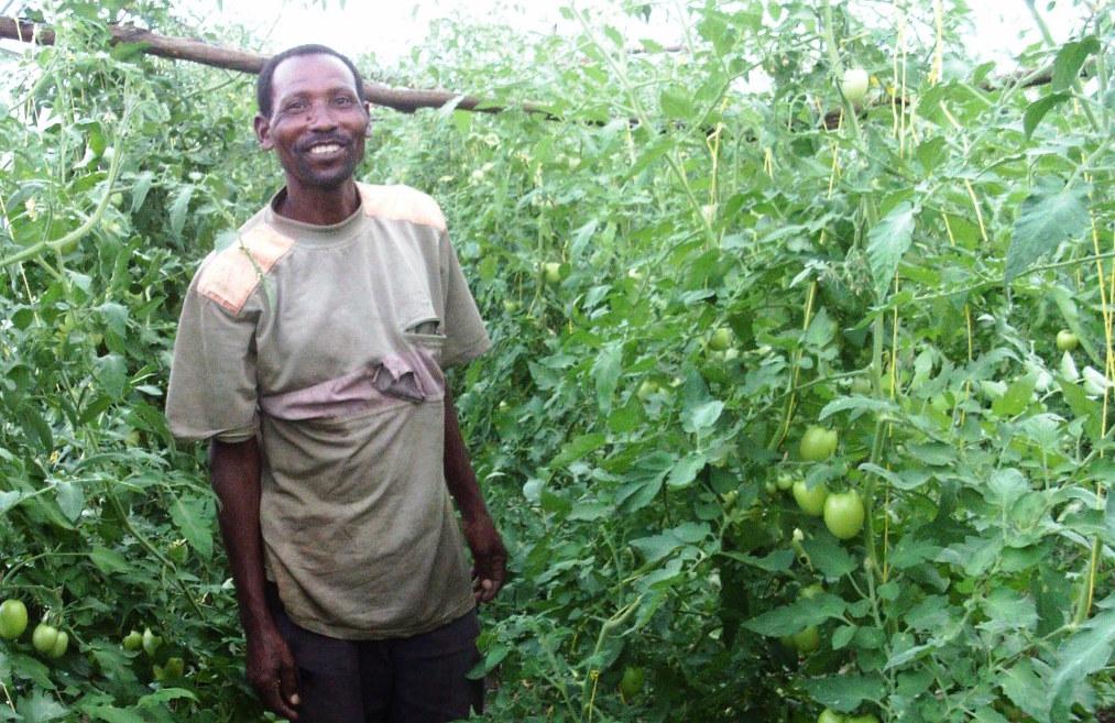 Green House Farming Flourishing in Mivukoni
