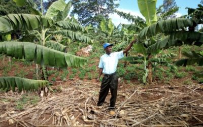 Foundations for Farming makes a big impact in Kaihura!